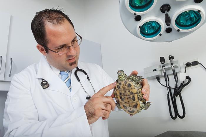 Vet Science Turtles